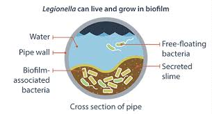 We offer custom solutions designed to address pathogens such as Legionella